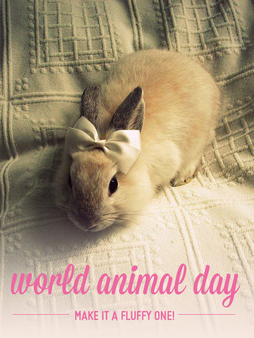 World Animal Day - via CarrieCan
